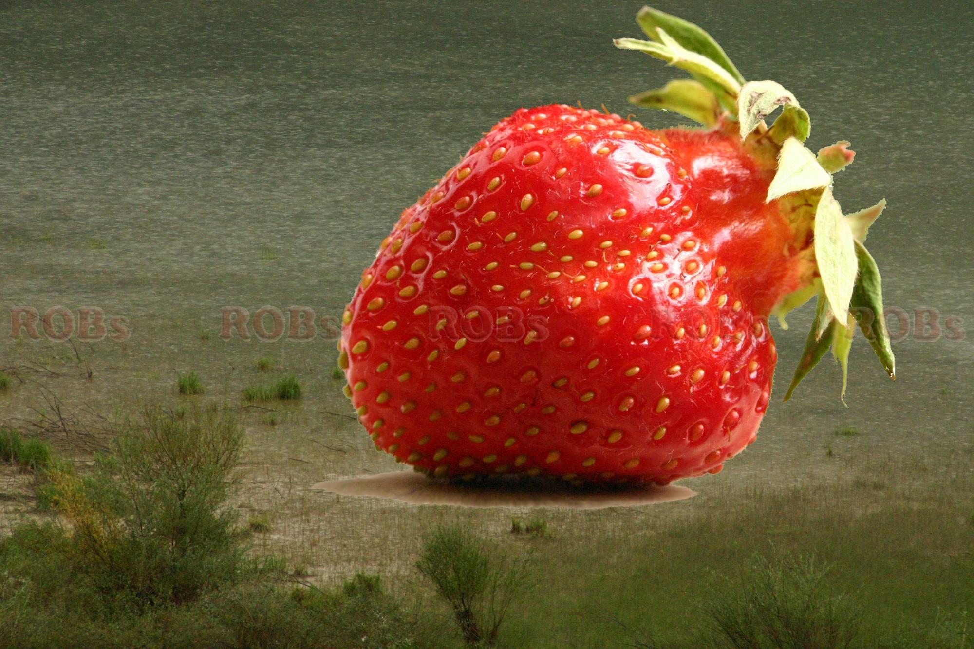 Baumann Erdbeeren